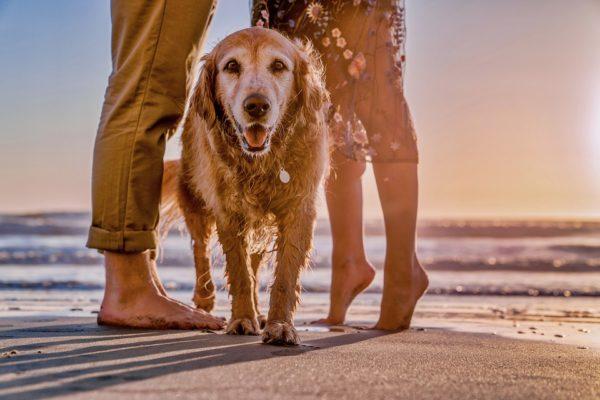 le migliori spiagge per animali