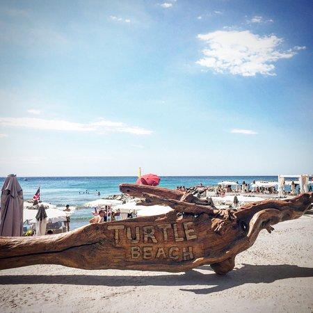turtle beach andora