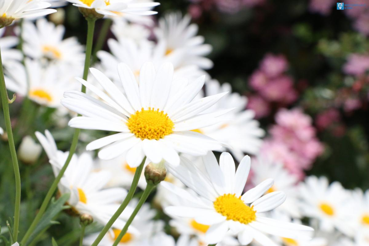 fiori in liguria