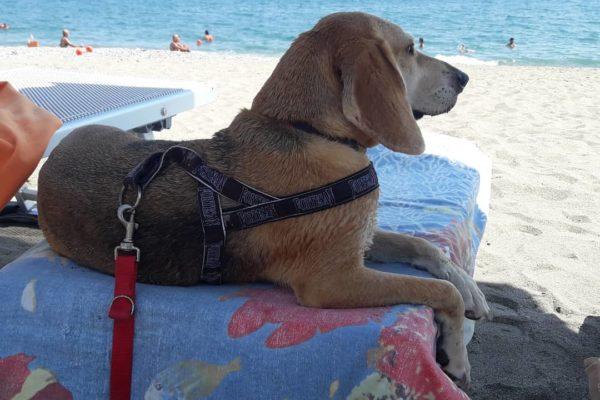 la spiaggia di pippo ad albenga in liguria